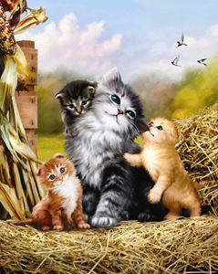 Kitten & Kin