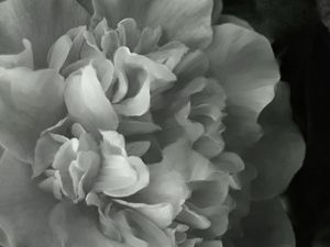white camilla - Lisa Welcher Art