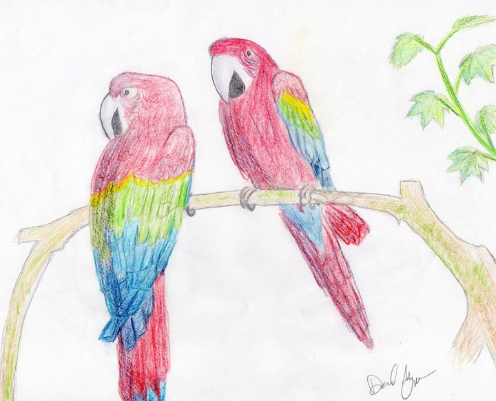 Macaws Relaxing On Branch - awesomedrawings