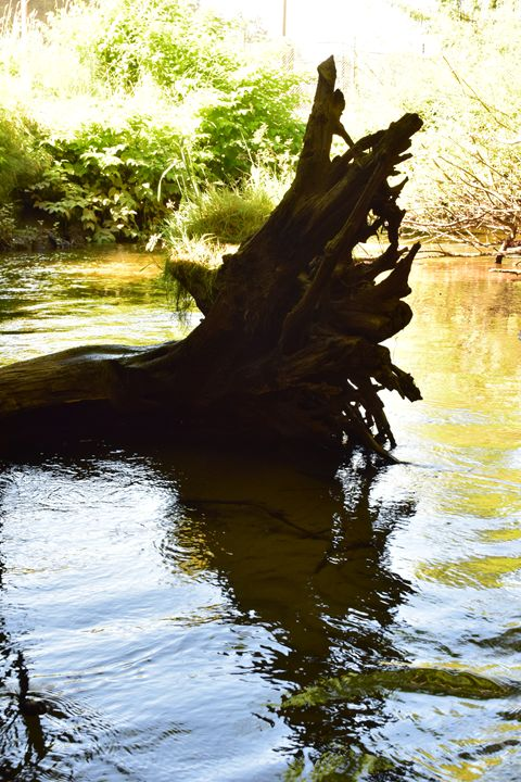 Drift wood Reflection - Faith Fougeron