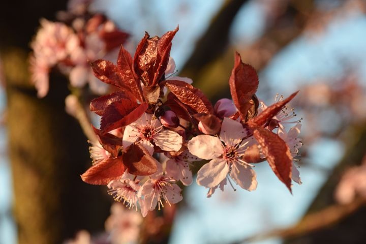 Spring blossoms - Faith Fougeron