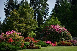 Slient garden