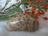Polished Petoskey Stone