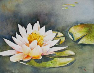Pink Waterlily - Mo's Art Stuff