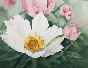 White and pink Magnolia blooms - Mo's Art Stuff