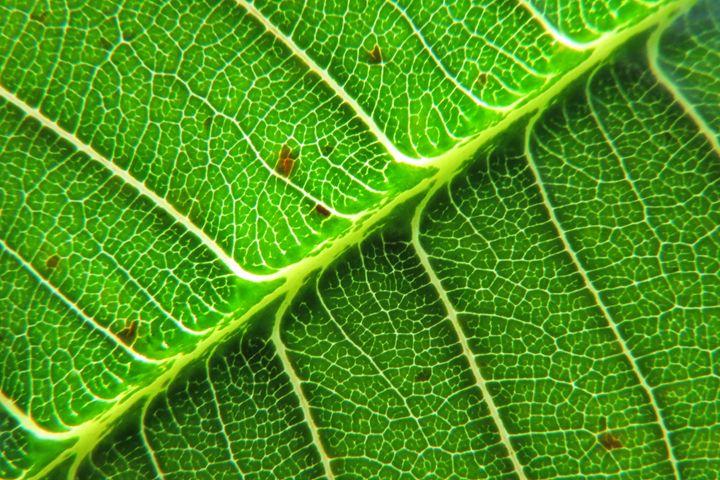 The Leaf - FlynnArt