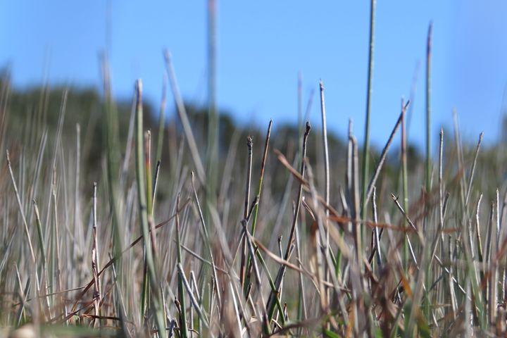 Ocean Grass - FlynnArt