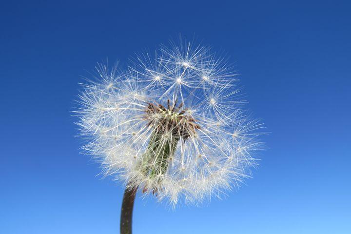 Dandelion in the sky - FlynnArt