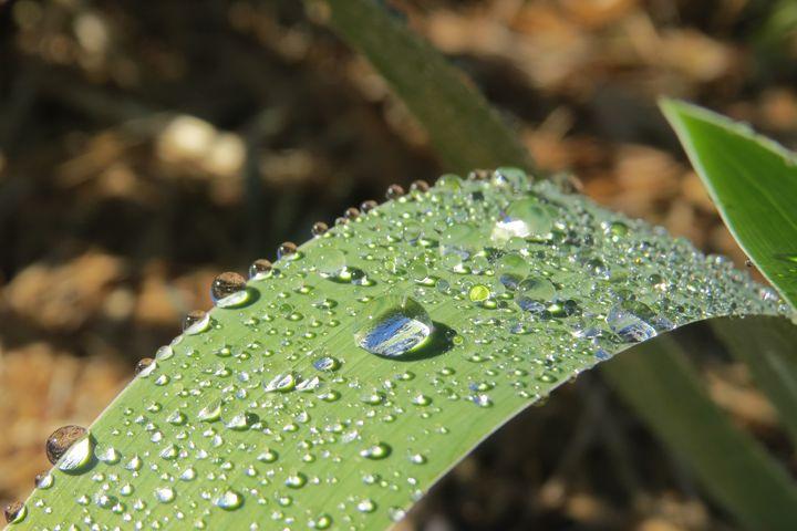 Rain Drops - FlynnArt