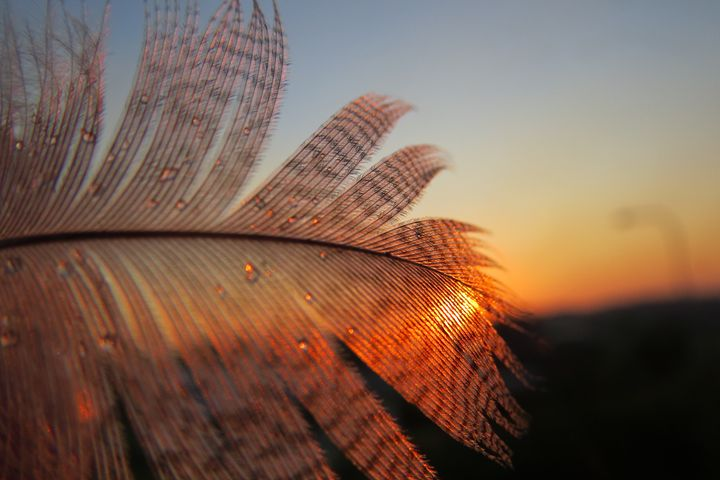 Feather in the sunset - FlynnArt