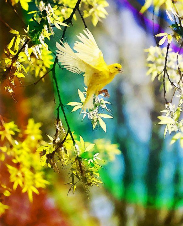 Yellow bird - Secret garden