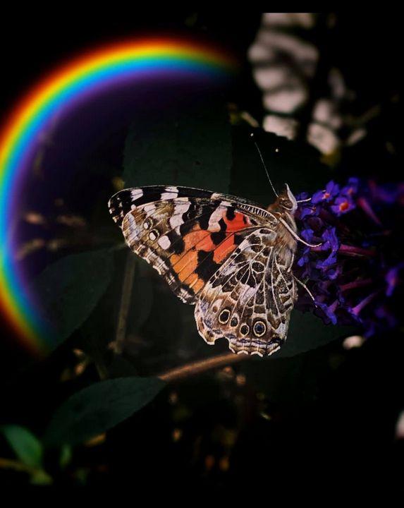 Wings - Secret garden