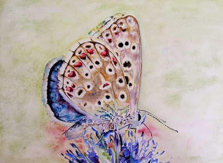 Butterfly - nile
