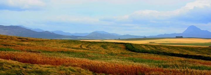 Farm landscape - Hibiscus