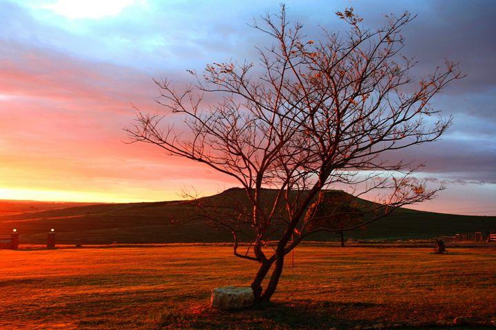 Sunrise tree - Hibiscus