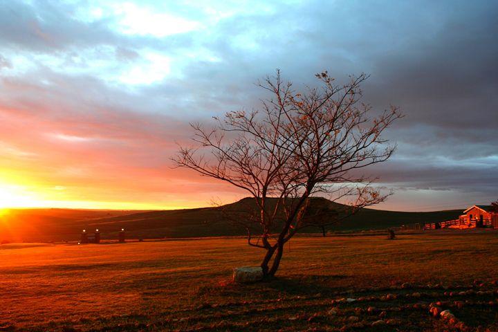Sunrise - Hibiscus