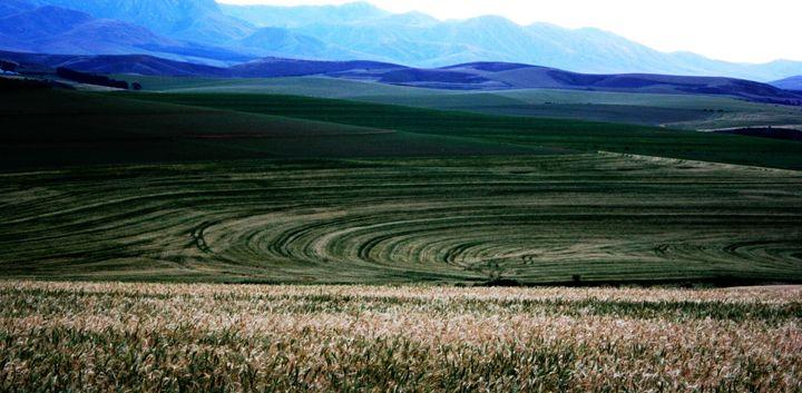 Wheat fields - Hibiscus