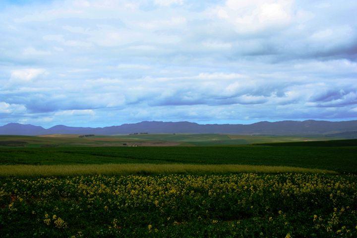 Cloudy landscape - Hibiscus
