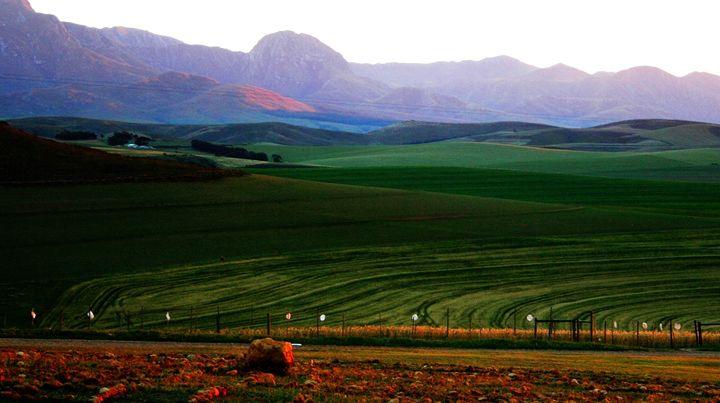 Beautiful landscape - Hibiscus