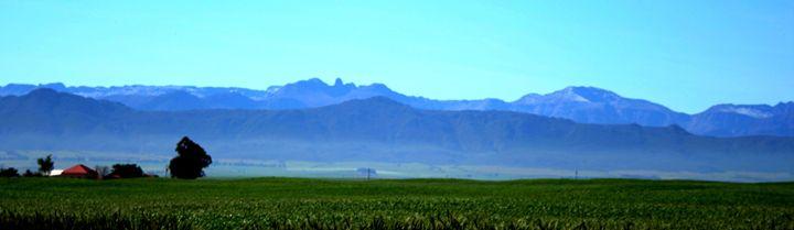 Blue mountains - Hibiscus