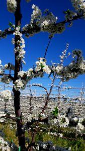 Neverending blossoms