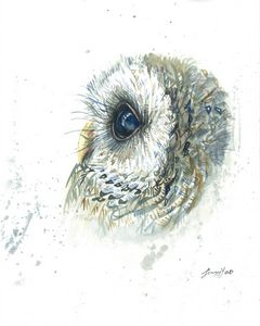 Watercolor painting Owl