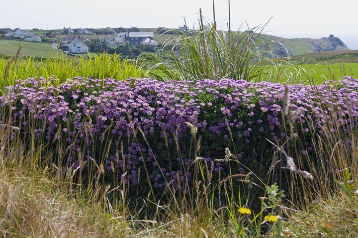Wild flowers - Pluffys portfolio