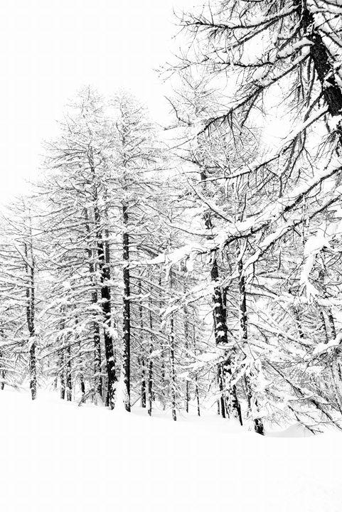 High key tree - Pluffys portfolio