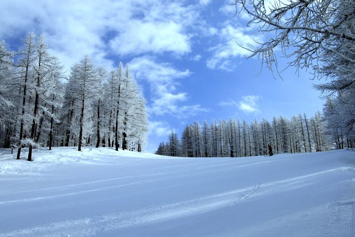 Blue skies and tree lined piste - Pluffys portfolio