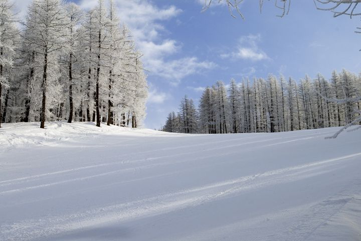 Tree lined slopes - Pluffys portfolio