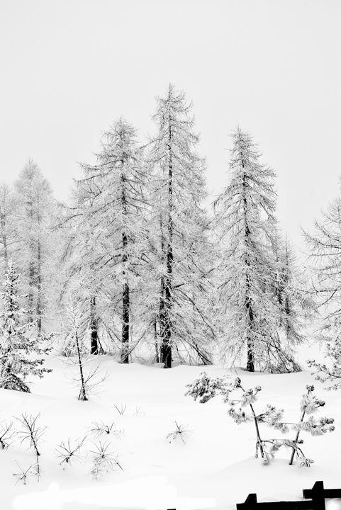 High key trees - Pluffys portfolio