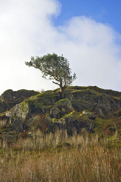A lone tree - Pluffys portfolio
