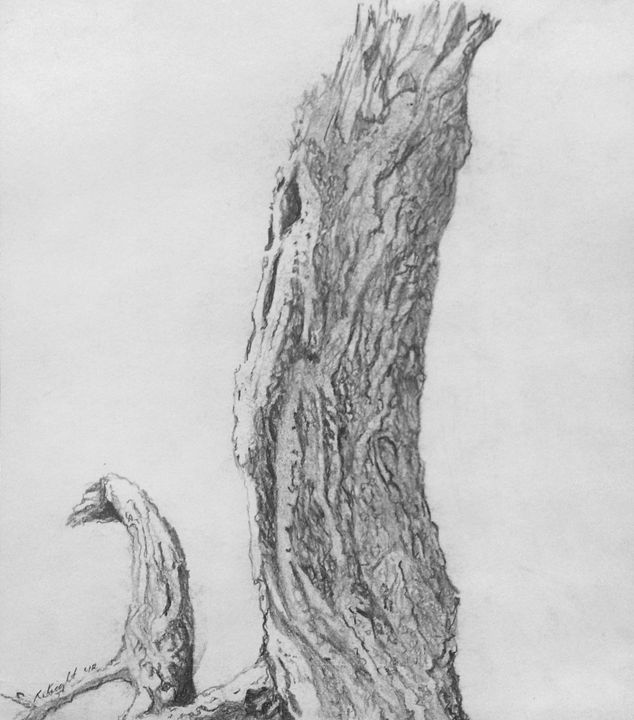 Tree Bark (study) - Randy Knight