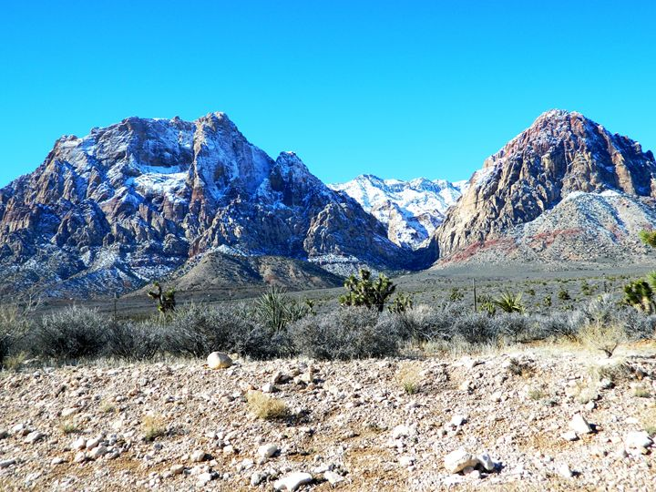 Winter in the Desert - Markell Smith Gallery