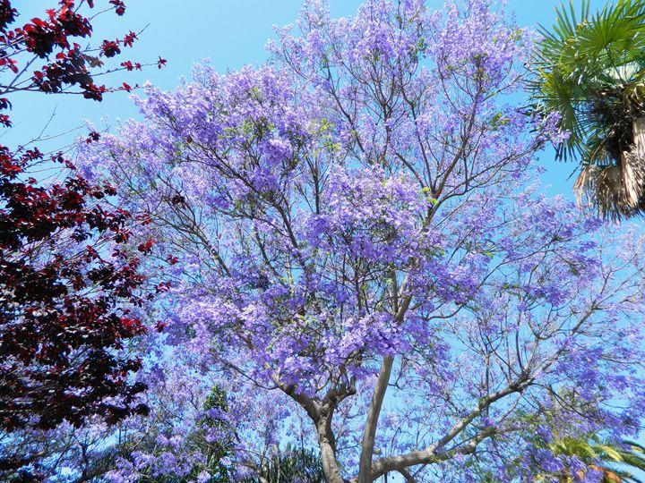 Lavender Tree - Markell Smith Gallery