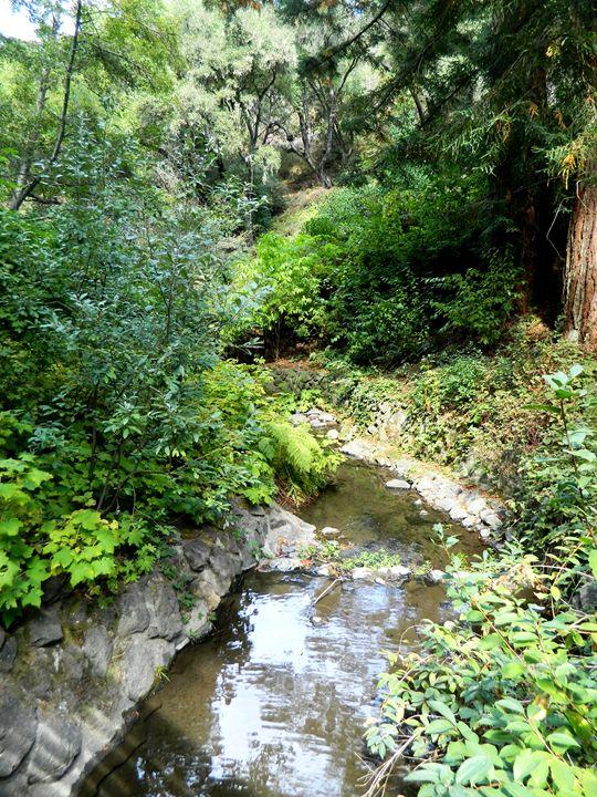 The Garden Creek - Markell Smith Gallery