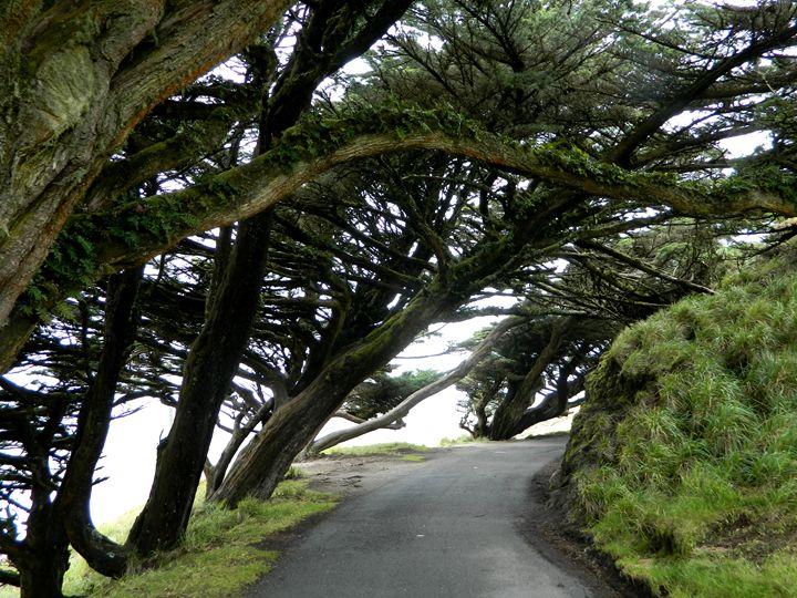Coastal Trees - Markell Smith Gallery