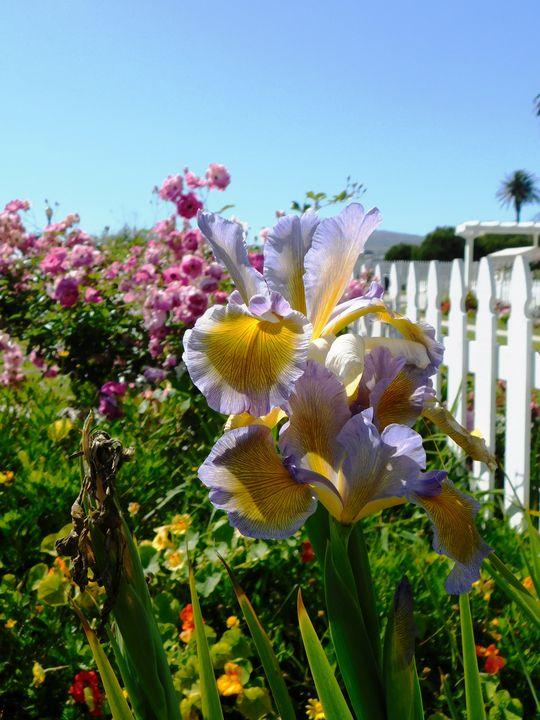 Garden Beauty - Markell Smith Gallery