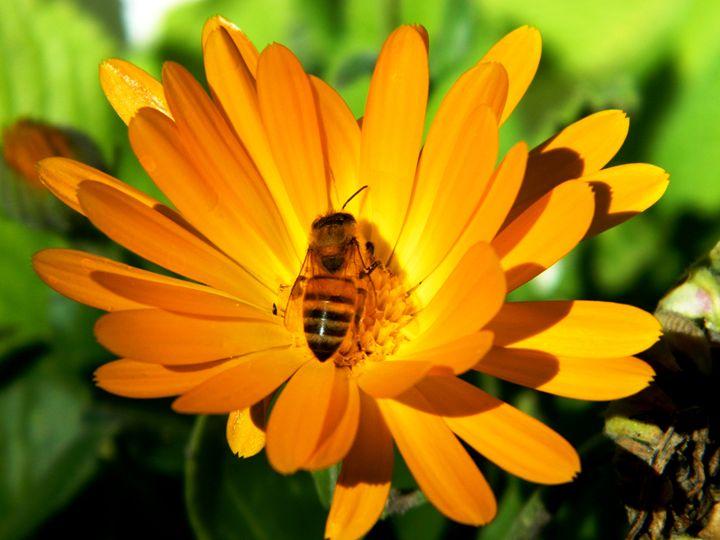 Pollinator - Markell Smith Gallery