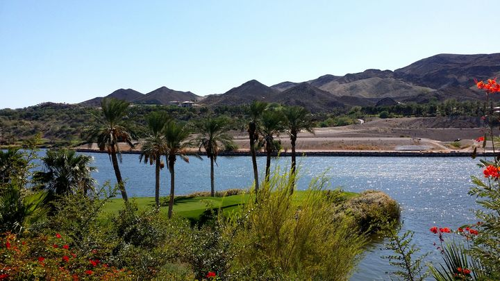 Desert Palms - Markell Smith Gallery