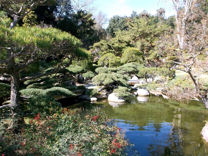 The Japanese Pond - Markell Smith Gallery