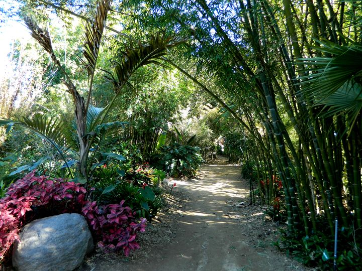 Garden Path - Markell Smith Gallery