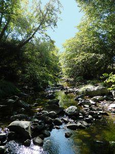 The Lone Creek