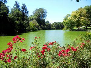 The Davis Lake