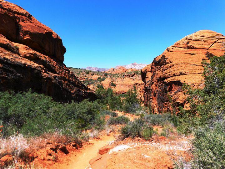 Desert Trails - Markell Smith Gallery