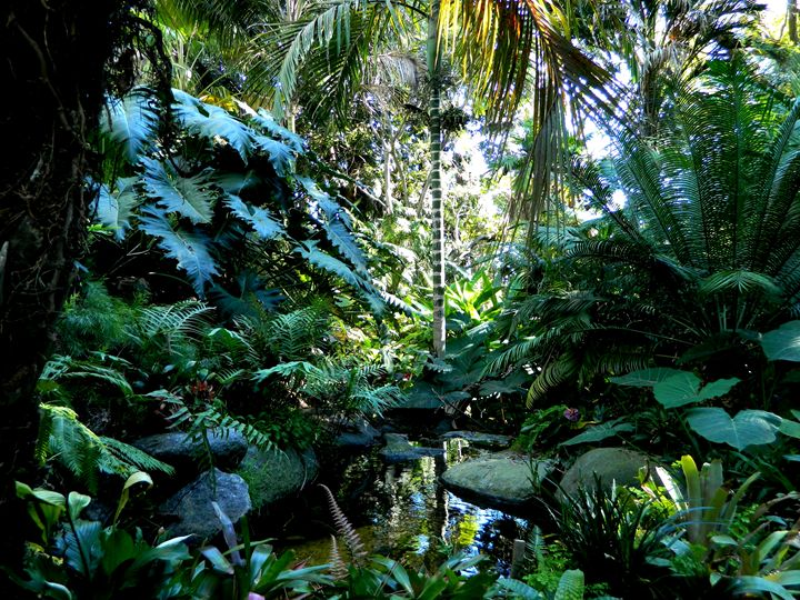 The Tropical Garden - Markell Smith Gallery