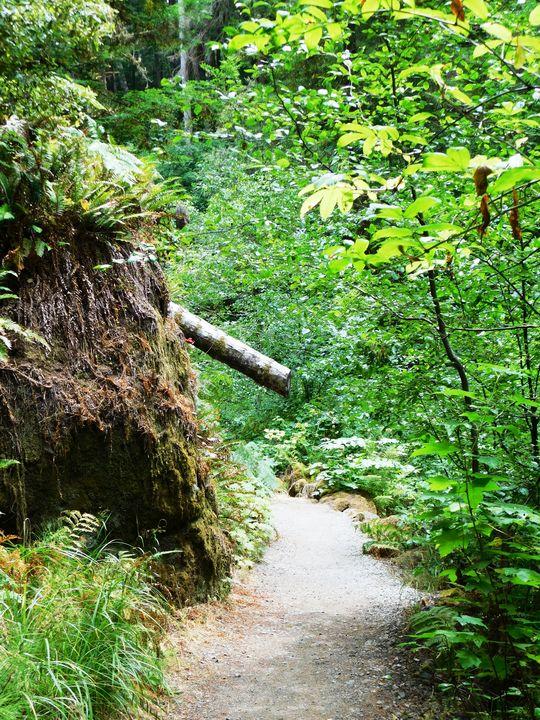 Fern Trail - Markell Smith Gallery