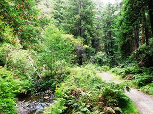 Fern Creek