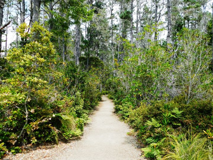 Pygmy Forest - Markell Smith Gallery