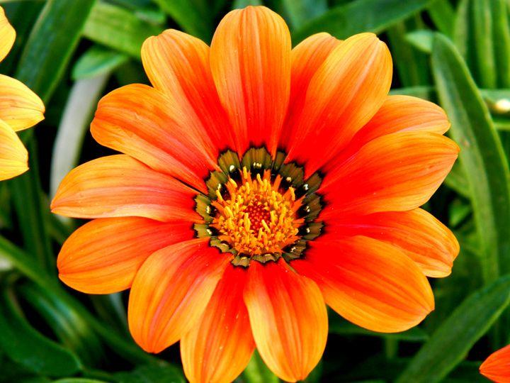The Orange Flower - Markell Smith Gallery